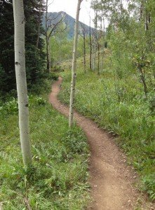 Low Interest Rates Hot Stock Market path through the woods, photo was taken in Aspen