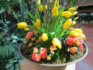 flowers in home for sale in Boulder colorado