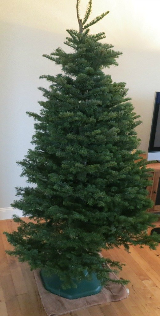 Christmas Trees Locations