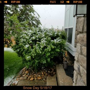 snow day at bob gordon house