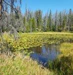lily pond breckenridge
