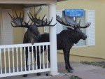 Bronze statue of two Moose in front of a building