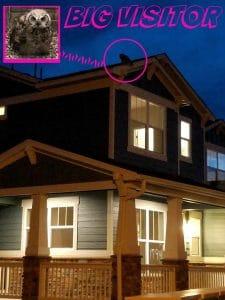 owl perchedatop a boulder duplex house