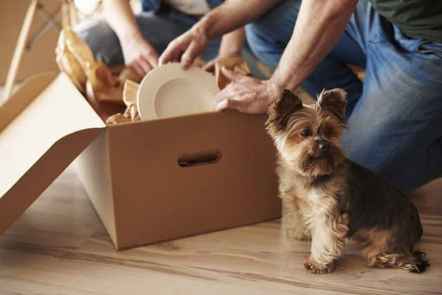 boulder couple packing box with their dog assisting